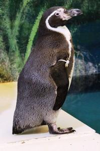 ペンギンアップ3